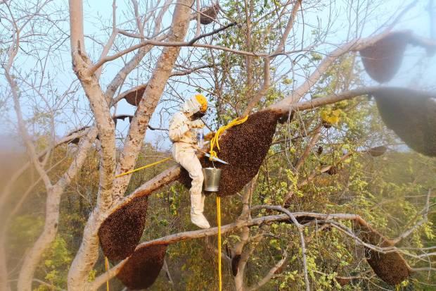 harvesting-wild-hives